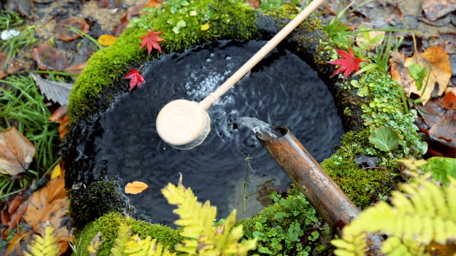 hd ms: water flow down to pond sacred, japan - maple leaf stock videos and b-roll footage