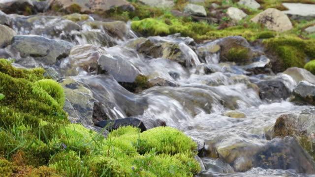 water flowing down a river, somewhere in kashmir himalayas - jammu e kashmir video stock e b–roll