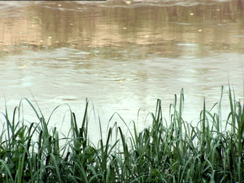 MS Water flowing down Ruganwa River / Kigali, Rwanda