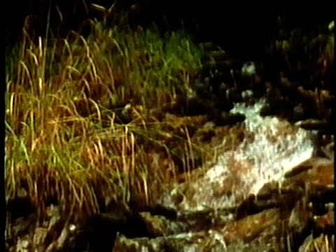 1969 MONTAGE Water flowing down stream/ USA/ AUDIO