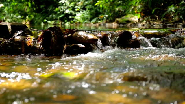 water flowing in streams - recreational horseback riding stock videos and b-roll footage