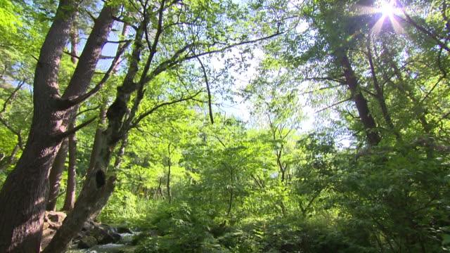 water flowing over rocks in lush forest, goshikinuma, kitashiobara, fukushima, japan - 夏点の映像素材/bロール