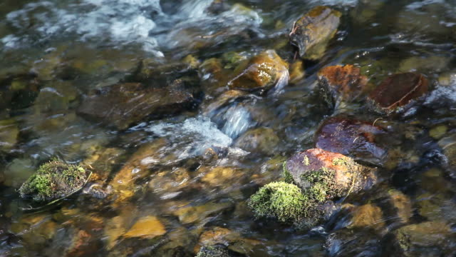 cu water flowing over rocks with moss in river / sundance, provo river, utah, usa - provo stock videos & royalty-free footage