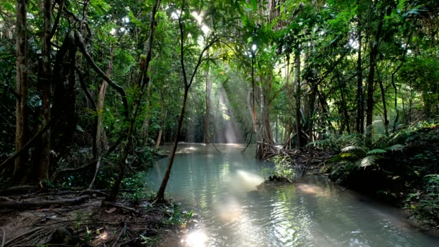 Water flowing with sunlight in tropical rainforest at morning