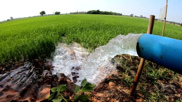 l'acqua scorre da un tubo nelle risaie verdi. - pompa dell'acqua video stock e b–roll