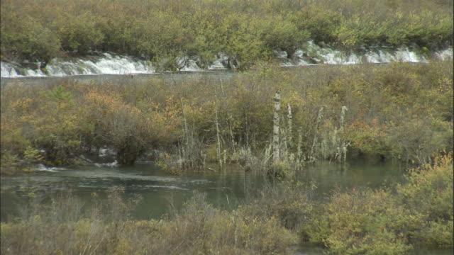 Water flows through scrub and birch trees, Jiuzhaigou, China