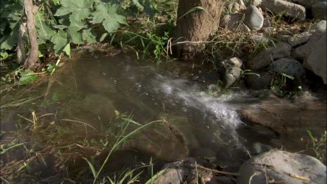 water flows towards vines with grapes, turpan, xinjiang province, china - grape leaf stock videos and b-roll footage