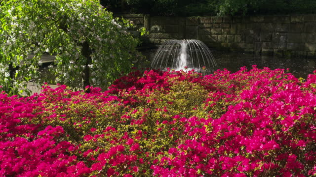 water fountain with red rhododendron. keukenhof gardens, lisse, south holland, netherlands. - rhododendron stock videos and b-roll footage