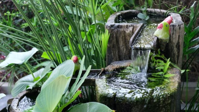water from fountain with aquatic vegetation - fountain stock videos & royalty-free footage