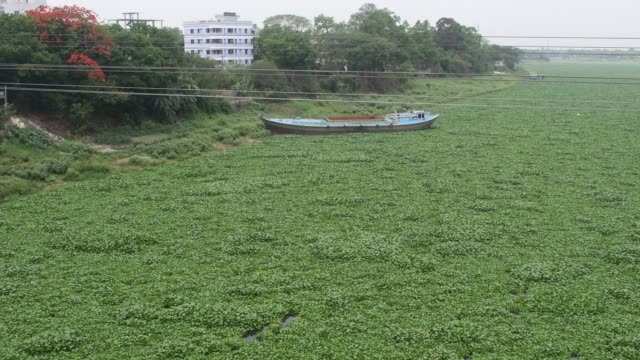 water hyacinth filled river in dhaka. - hyacinth stock videos & royalty-free footage