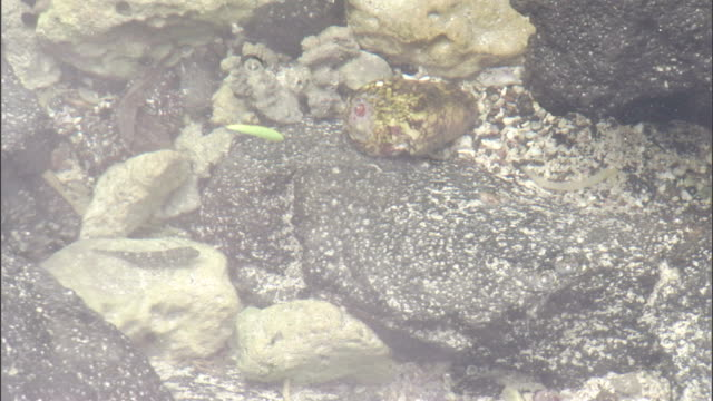 water in a tidal pool flows across a seashell. - seashell stock videos & royalty-free footage