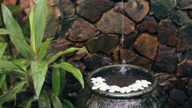 ms water in asian ornamental garden flowing  into bowl filled with frangipani flowers - formal garden stock-videos und b-roll-filmmaterial