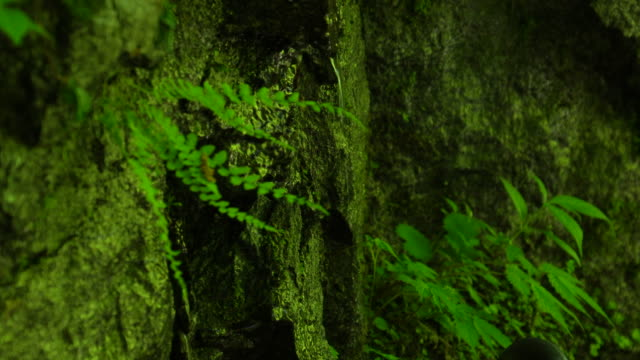water in green forest / nishizawa valley - plusphoto stock videos & royalty-free footage