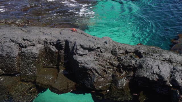 water in the galapagos - galapagosöarna bildbanksvideor och videomaterial från bakom kulisserna