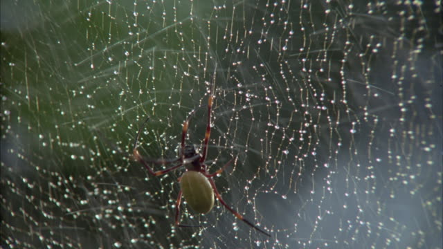 Water is sprayed on a spider crawling on its intricate web.