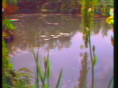 water lilies float in a pond at the recently re-opened monet's gardens in giverny, france - france stock videos & royalty-free footage