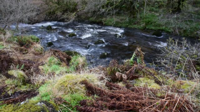 water of gregg from the fairy knowe footpath. - david johnson stock videos & royalty-free footage
