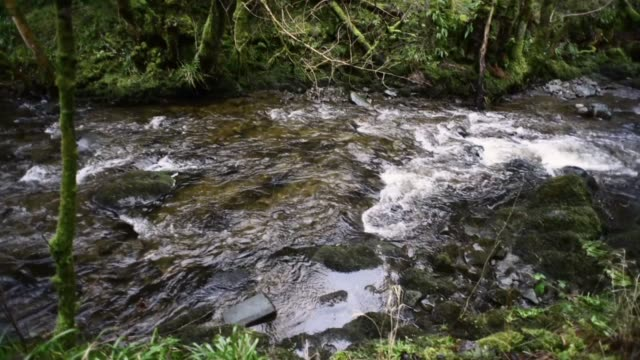 water of gregg passing over rocks in ayrshire - david johnson stock videos & royalty-free footage