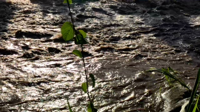 water of the suchiate river flows between guatemala r, and mexico , l, on august 9, 2018 in talisman, mexico. an illegal crossing point there is... - porous stock videos & royalty-free footage