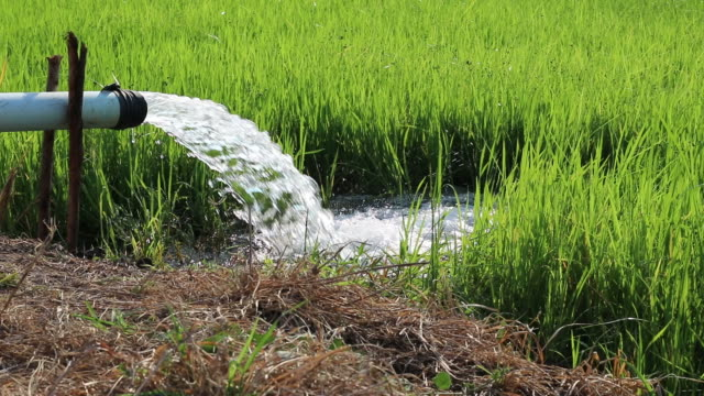 water pipes flow into the rice paddies. - water pump stock videos & royalty-free footage