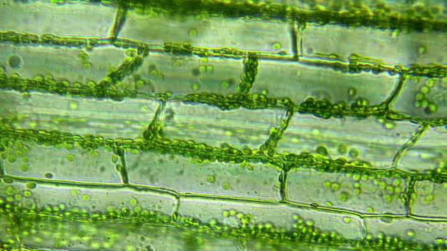 water plant leaf, microscopic view - water plant stock videos and b-roll footage