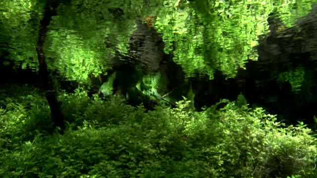 Water plants in Kakita River
