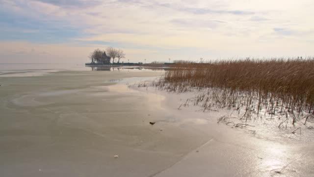 vídeos y material grabado en eventos de stock de ds plantas de agua en la playa del lago balaton - punto de referencia natural
