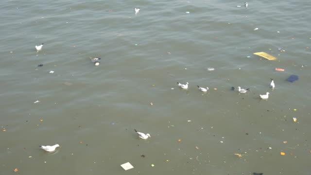 water pollution - sea bird stock videos & royalty-free footage