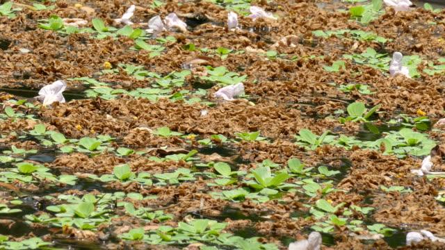 vídeos de stock e filmes b-roll de poluição de água - orgânico