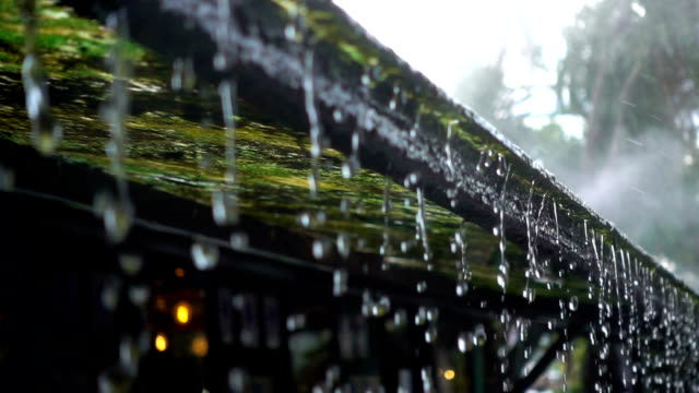 slo mo water raindrop from moss roof of house with fog - pioggia video stock e b–roll
