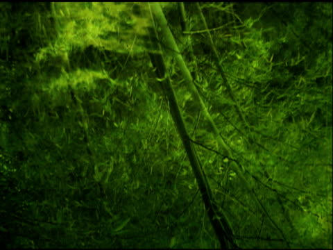 water reflection of bamboo forest in asia (ntsc) - bamboo plant stock videos and b-roll footage