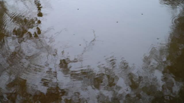 vídeos de stock, filmes e b-roll de água reflexed - lago reflection