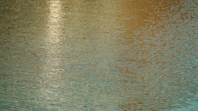 water ripples in the breeze - sunset stock videos & royalty-free footage