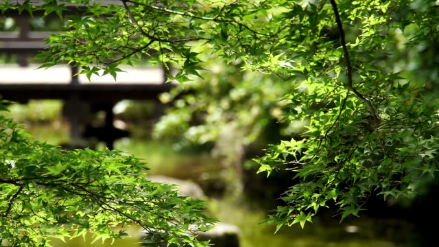 water ripples reflect light onto green maple leaves - oriental garden stock videos and b-roll footage