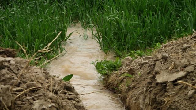 water rippling into farmland - lera jord bildbanksvideor och videomaterial från bakom kulisserna