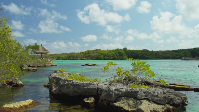 vídeos y material grabado en eventos de stock de water rippling near foliage on rock / tulum, quintana roo, mexico - quintana roo