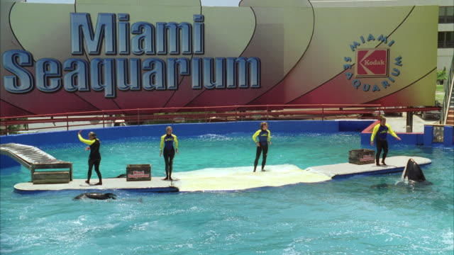 ws water show at miami seaquarium / key biscayne, florida, usa - captive animals stock videos & royalty-free footage