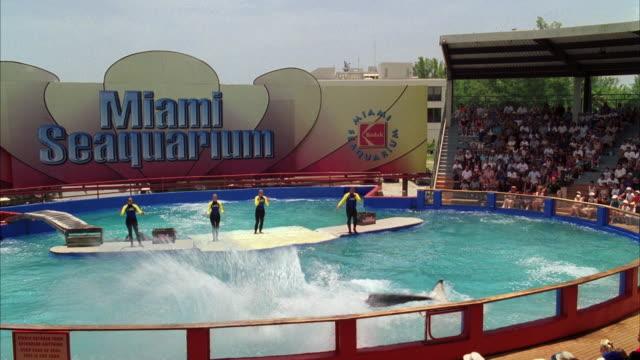 WS Water show at Miami Seaquarium / Key Biscayne, Florida, USA