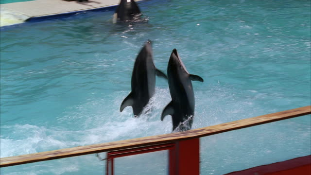ws pan water show at miami seaquarium / key biscayne, florida, usa - captive animals stock videos & royalty-free footage
