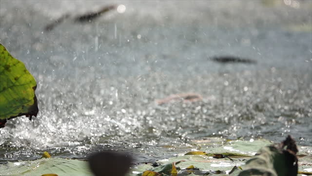 water splash in slow-motion with blurred background - boxer dog stock videos & royalty-free footage