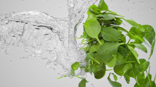 SLO MO Wasser planschen junge grüne Blätter in der Luft