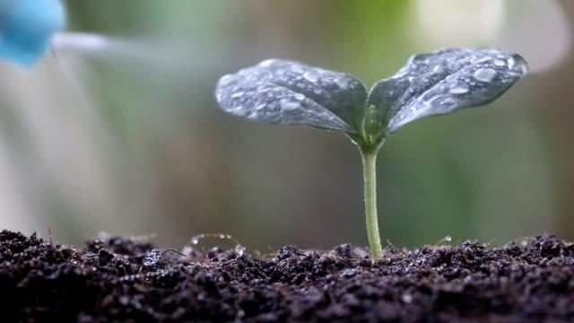 Water sprayer to green Seedlings of vegetables on soil.