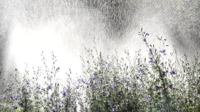 Water Spraying Flowers