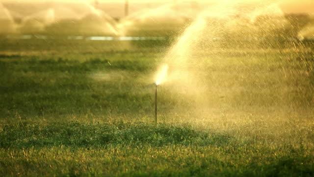 Sprinkler acqua al tramonto