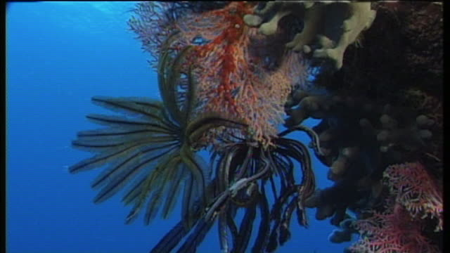 water stirs underwater plant fronds. - water plant stock videos and b-roll footage