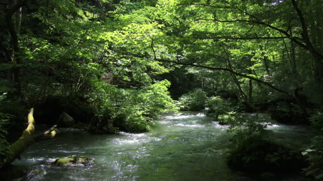 water stream and green forrest in dolly motion