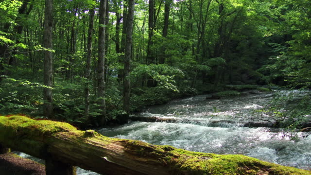 water stream and green forrest in dolly motion - log stock videos & royalty-free footage