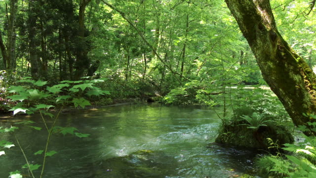 water stream and green forrest - 川点の映像素材/bロール