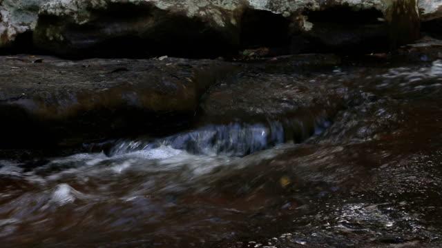 acqua flusso nella foresta - in buona condizione video stock e b–roll
