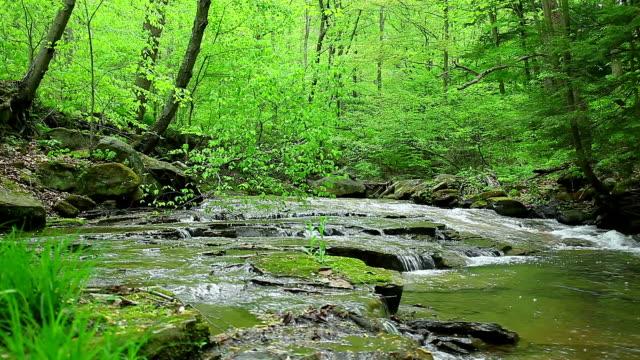 Wasser Bach im grünen Holz. Natur Hintergrund